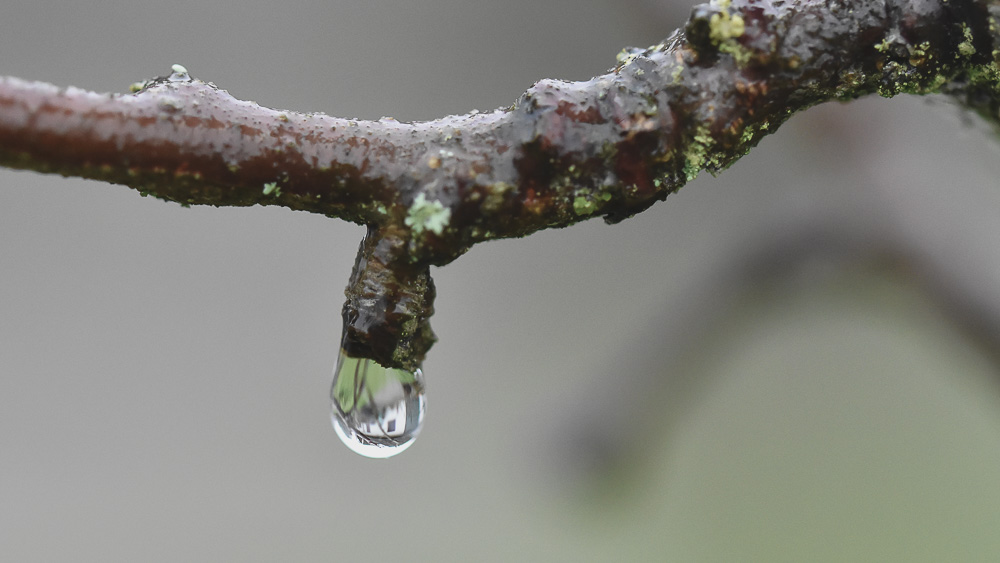 Gren med droppe